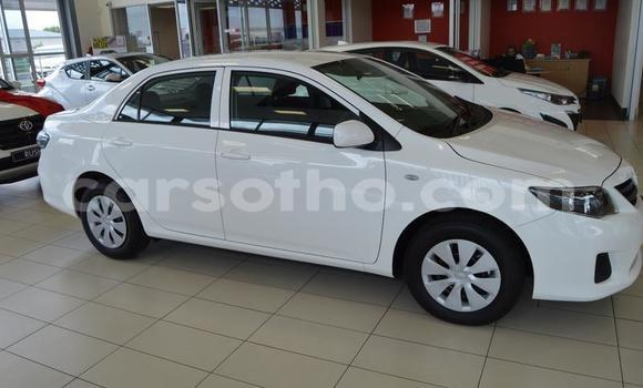 Buy Used Toyota Corolla White Car in Roma in Maseru