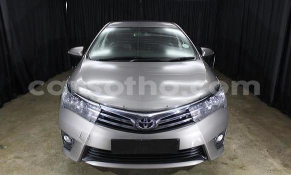 Buy Used Toyota Corolla Silver Car in Butha–Buthe in Thaba-Tseka