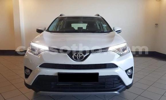Buy Used Toyota RAV4 White Car in Peka in Leribe