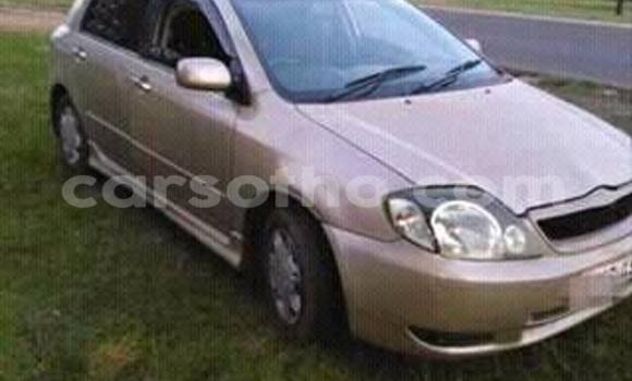 Buy Used Toyota Runx Other Car in Maseru in Maseru