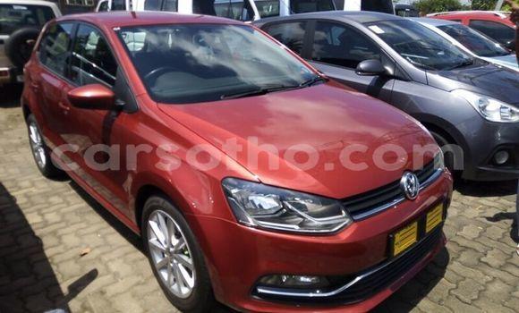 Buy Used Volkswagen Polo Red Car in Maseru in Maseru