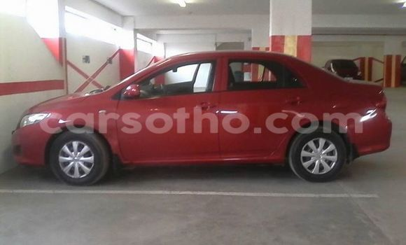 Buy Used Toyota Corolla Red Car in Maseru in Maseru