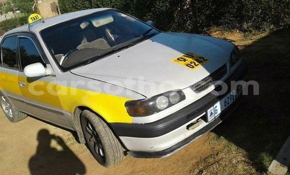 Acheter Occasion Voiture Toyota Corolla Gris à Maseru au Maseru