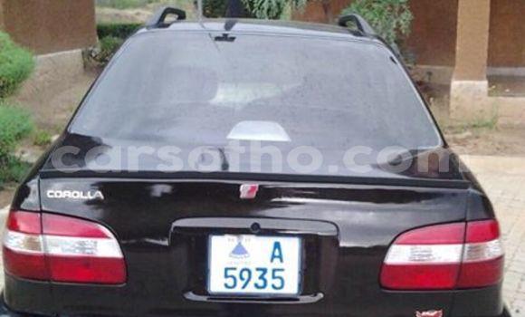 Buy Used Toyota Corolla Black Car in Maseru in Maseru