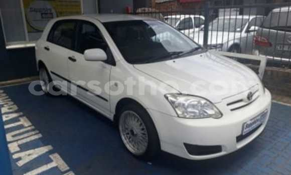 Buy Used Toyota Runx White Car in Maseru in Maseru