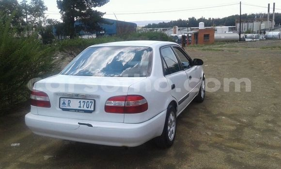 Buy Used Toyota Corolla White Car in Maseru in Maseru