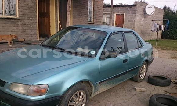 Buy Used Toyota Corolla Other Car in Maseru in Maseru