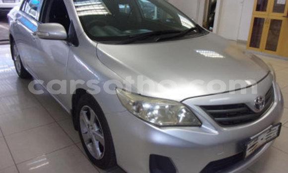 Buy Used Toyota Corolla Other Car in Maputsoa in Leribe