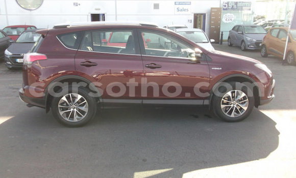 Buy Used Toyota RAV4 Other Car in Mafeteng in Mafeteng